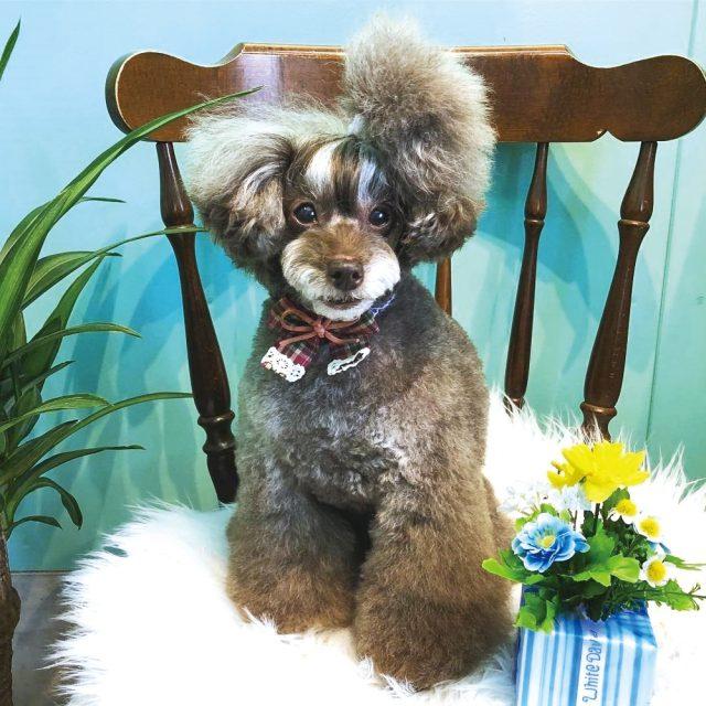 Dog Salon Little*Monster